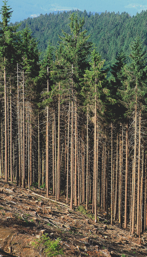 how to get into the forestry industry